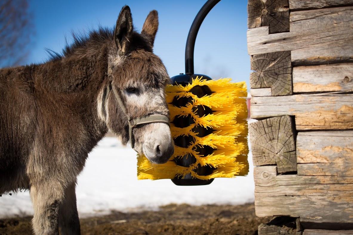 Easyswing Midi Cattle Brush Latter